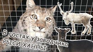В гостях у заводчика Ханны / Волкособы, серверные олени, лани, полярные совы, арктические волки, як