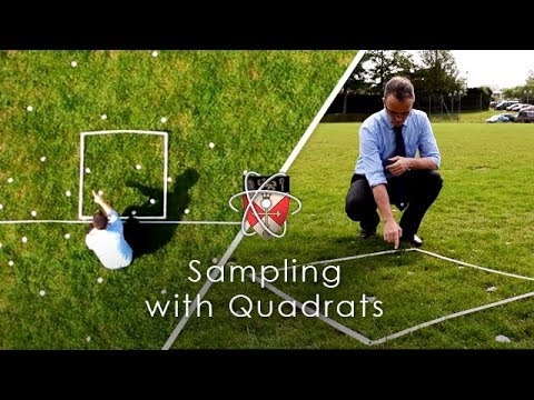 Sampling with Quadrats - GCSE Biology Required Practical - YouTube