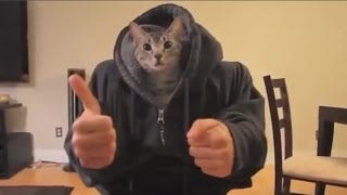 Video kucing lucu banget bikin ngakak