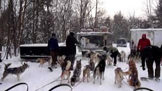 Toronto Team Building - Winter Team Building - Dog Sledding