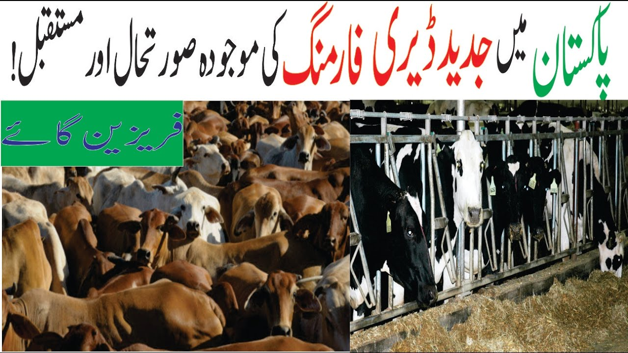 Dairy farming in pakistan in urdu pdf apps xilusvirgin.