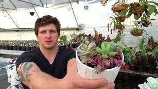 Где взять лучшие растения для коллекции?