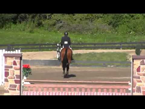 Video of Levland ridden by Peter Wylde from Net!