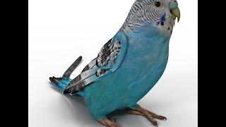 Papağan Ve Muhabbet Kuşu Konuşturma Sesi Ses Kaydı AŞKIM 1 saat