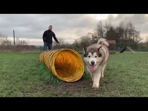 REACH RESCUE HUSKY PARTY INVITES PHIL TO JOIN