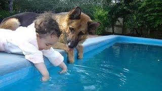 Impressed' German Shepherd dogs who desperately protect human children