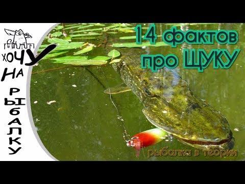 Рыбалка в теории. 14 фактов про ЩУКУ.