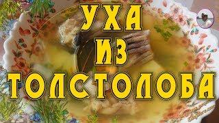 вкусный рыбный суп. Уха из толстолобика от Petr de Crilon  & SonyKpK
