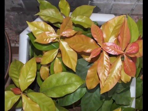 Как определить вид растения