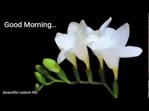 Good morning and flowers image good morning and flowers image mightylinksfo