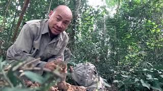 การเอาตัวรอดในป่า ผจญภัยตะลุยป่าดิบ คนเบิกทาง Explorer