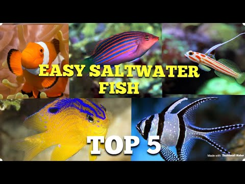 Top 5 Easy Saltwater Fish 🤙🏼