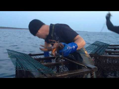 Lobster Fishing 2014 / Wicked Sea Adventures