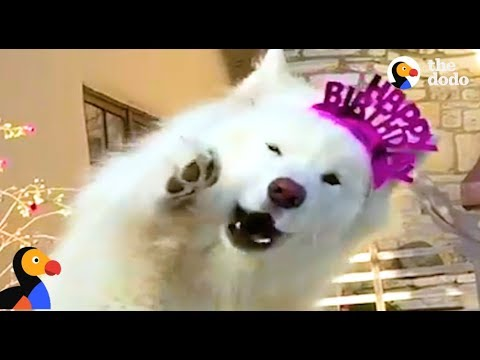 Talking Dog is SO FLUFFY | The Dodo