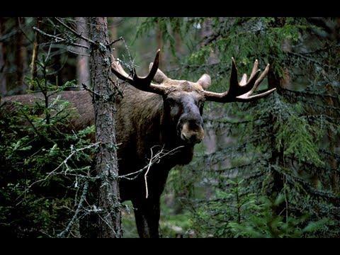 Охота в Удмуртии 2015