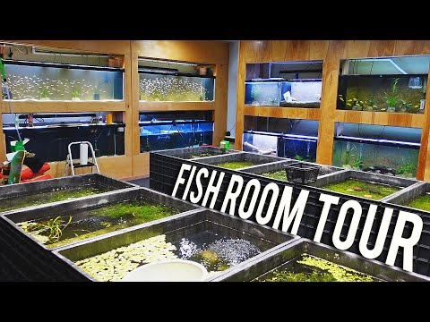 Every Single Fish In The Aquarium Co-Op Fish Room [Fish Room Vlog]