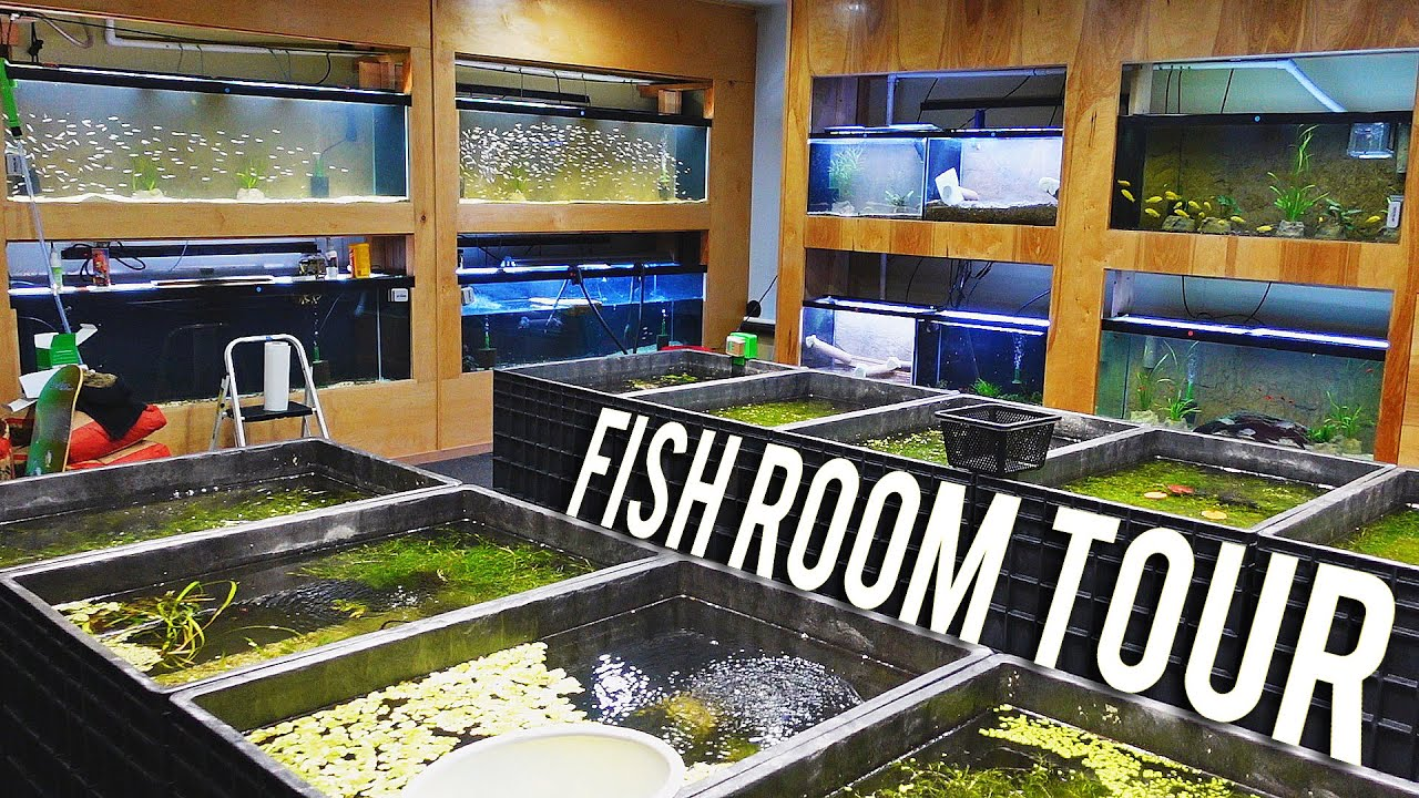 Every Single Fish in the Aquarium Co-Op Fish Room [Fish Room Vlog]