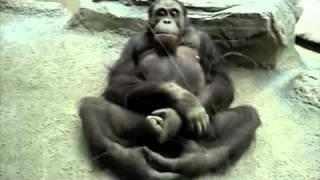 Monkey Sex.