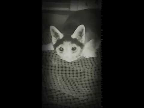 Hull kass!