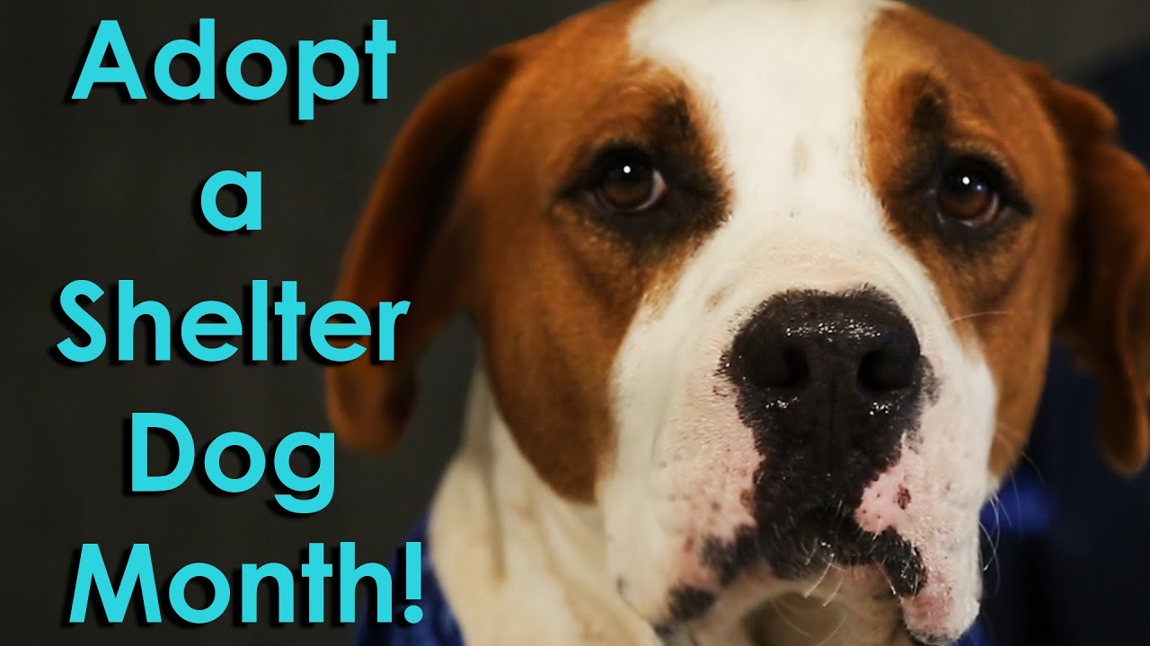 i like big mutts adopt a shelter dog month music video