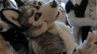 Another Furry Video