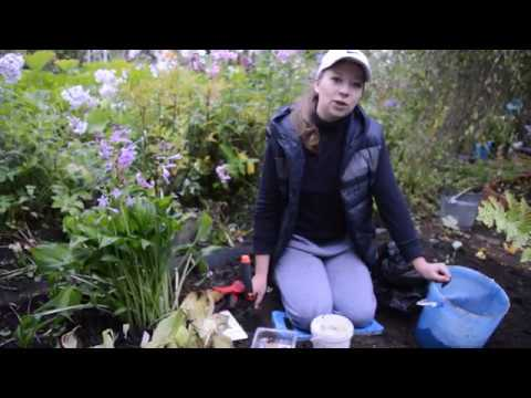 Садовая орхидея: посадка