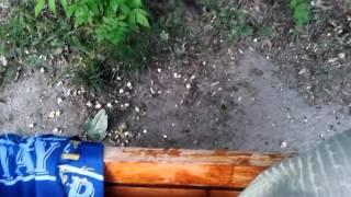 Parc din Galaţi plin de şobolani
