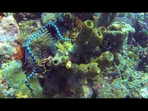 Alor diving film 2015 Indonesia