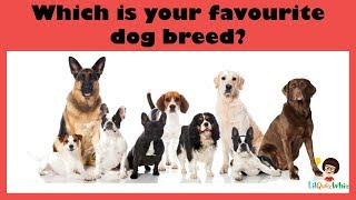 A Quiz - For the love of Dogs :)