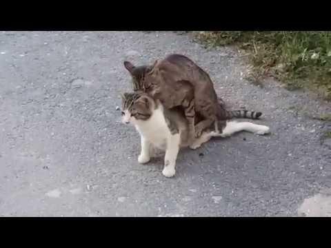 Download CATS CAUGHT ON STREET MATING | PAKA WAKUTWA MTAANI WAKIVUNJA AMRI YA SITA