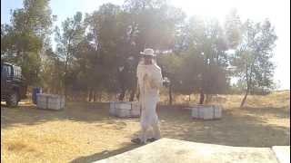 The Dancing Beekeeper