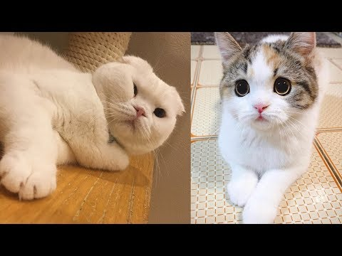 Baby Cats – Cute and Funny Cat Videos Compilation | Cute Kittens