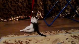 Черно-белый котенок ищет свой дом, отдам котенка в добрые руки
