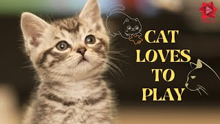Cat Loves to Play