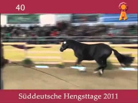 Dr. Doolittle x Rubin Royal - 2011 South German Stallion Licensing Mp3