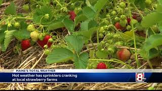 Hot weather makes for early stawberries at local farms