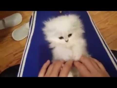 gatinho fofinho brincando