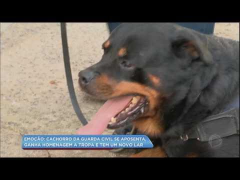 Cão da Guarda Civil se aposenta e ganha homenagem especial