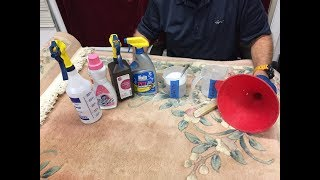 How To Remove Pet Urine From A Wool Rug