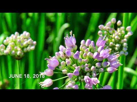 2018 08 08 The Meadow in Full Bloom