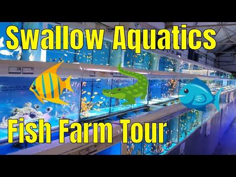 Swallow Aquatics Fish Farm Tour