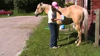 Sheath cleaning tips on horses!