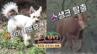 SBS [TV 동물농장] - 22일(일) 예고
