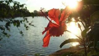 miguel aceves mejia flor del viento