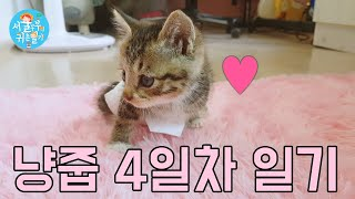 Kitten Rescue Día 4