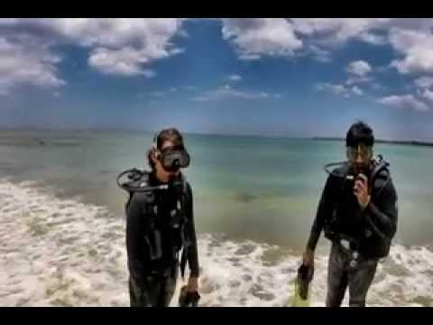 Diving Adventures