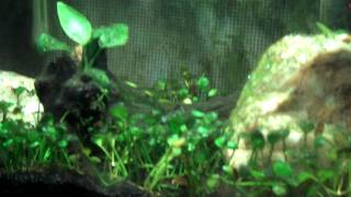 c02 injection overload in the 5 gallon planted aquascape