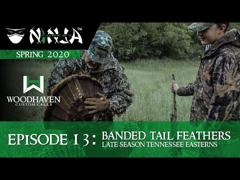 Turkey Ninja 2020 E13: BANDED TAIL FEATHERS - Late Season Tennessee Easterns