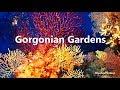 Gorgonian Gardens