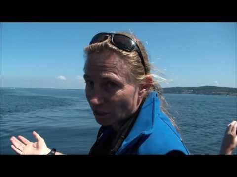 Orca Rescue Operation